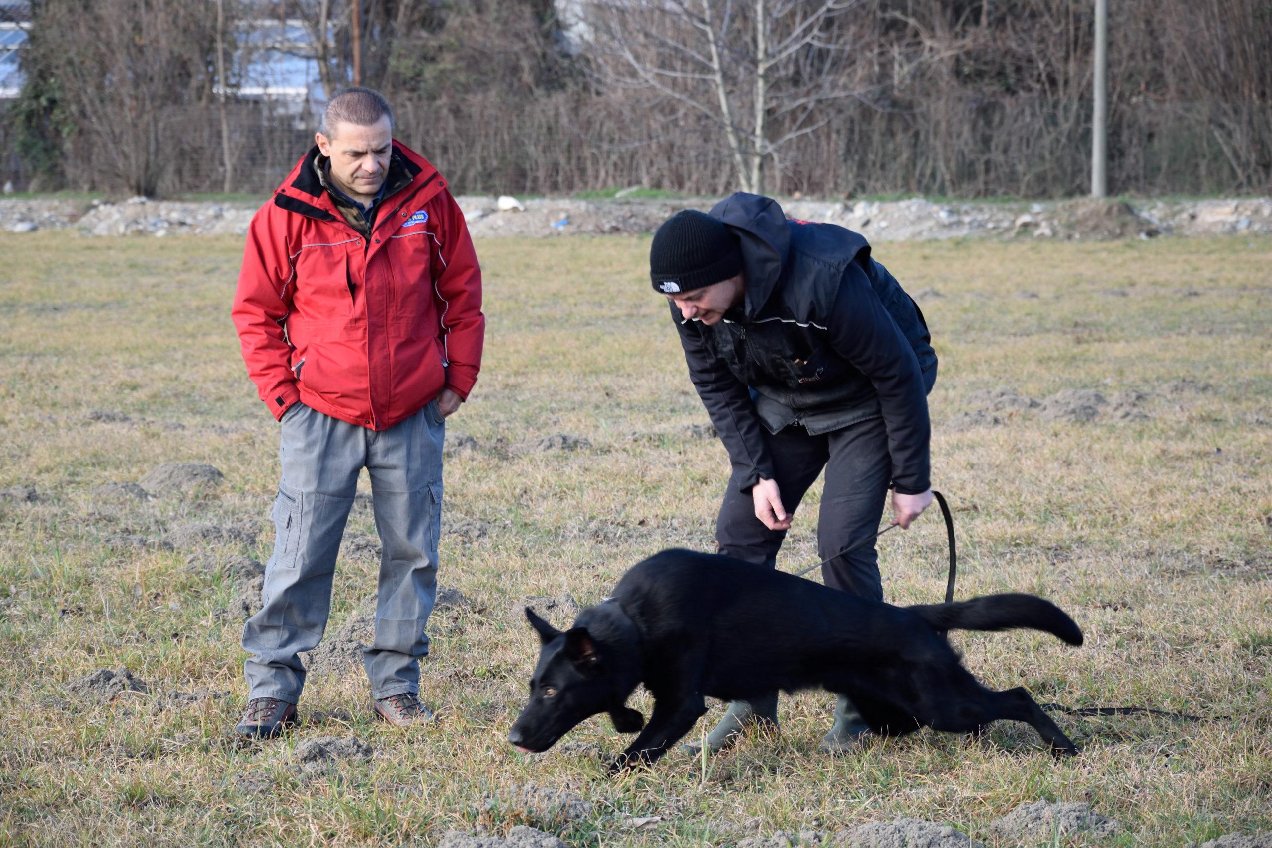 Cane in allenamento per una pista